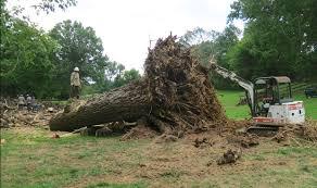 Les divers techniques pour dessoucher un arbre