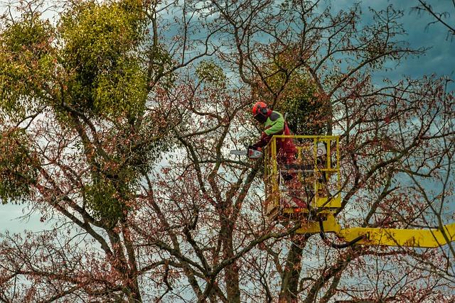 débroussaillage et élagage d'arbre