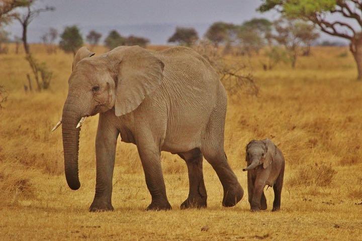 Voyage safari en Afrique : 3 réserves animalières d'exception à visiter